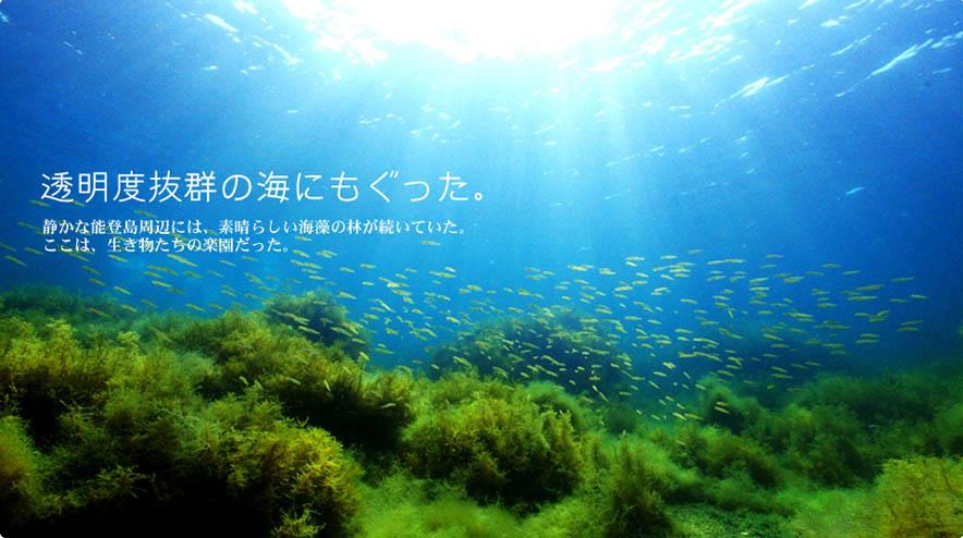透明度抜群の海にもぐった。