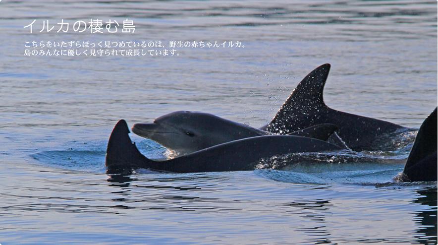 イルカの棲む島